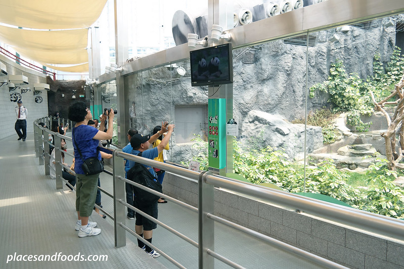 macau giant panda pavilion tourists