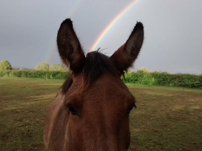 rainbowmule