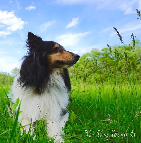 Jasper's Zen Moment