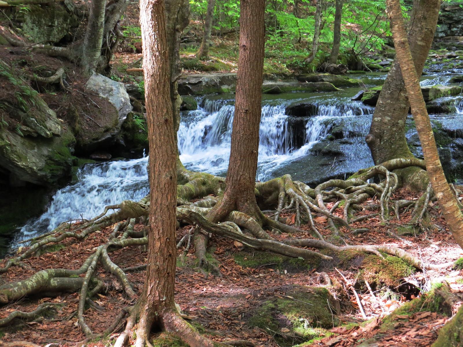 Willowemoc Wild Forest, Catskills, NY