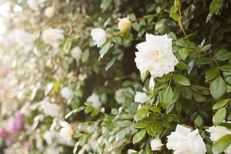flores de paseo