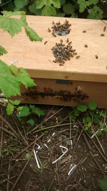 bee swarm June 15 2