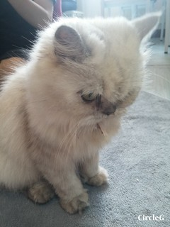 CIRCLEG CAT CAFE 貓貓地 香港 旺角 COOKING HEYHEY (13)