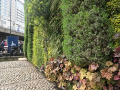 Green wall & road, towerblocks