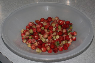 The First Wild Strawberries This Year!