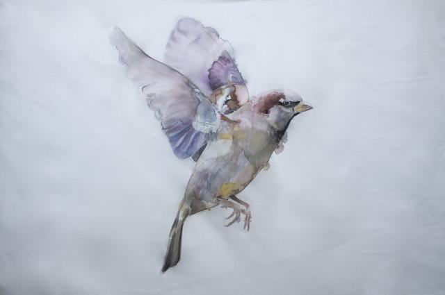 GH Birds 9