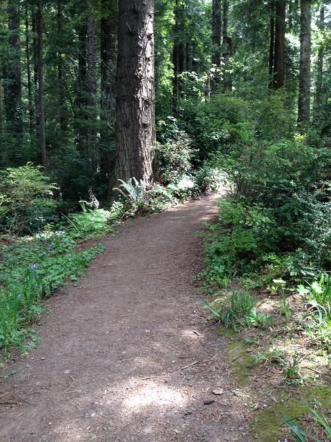 Arcata Community Forest #2