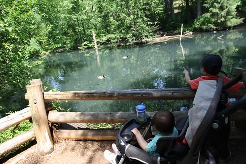 Bronx Zoo 2015