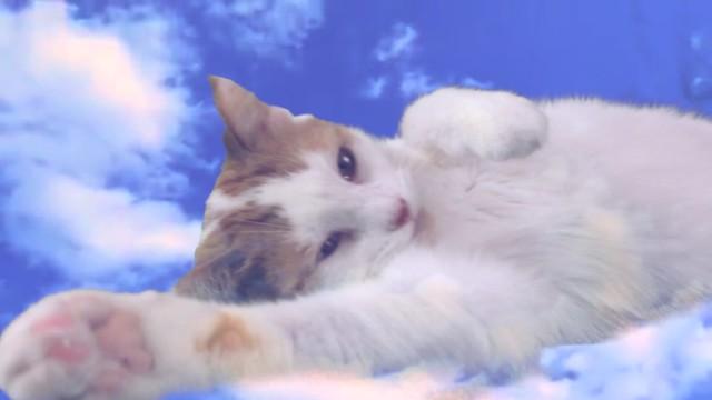 "GFY - Nadia, aka ""Feline Ambassador To Humanity"""