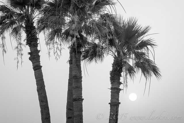Sunset (Monochrome), Luxor, Egypt 2015