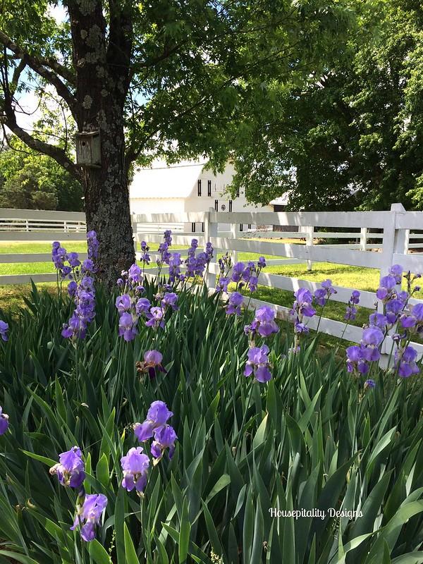 Hills Farm-Housepitality Designs
