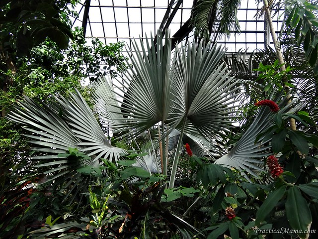 LincolnParkConservatory03
