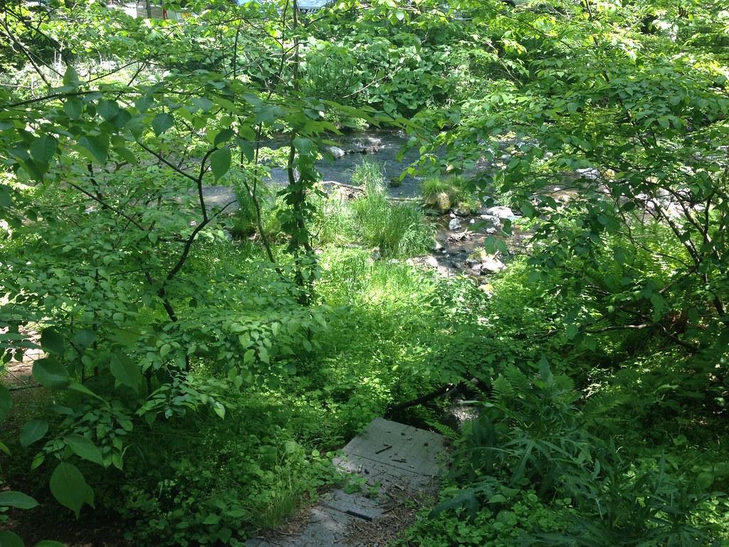 星野リゾート近くの森