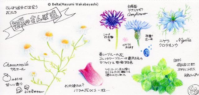 2015_05_25_flowers_01