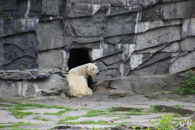 Tierpark Friedrichsfelde 17.05.201570