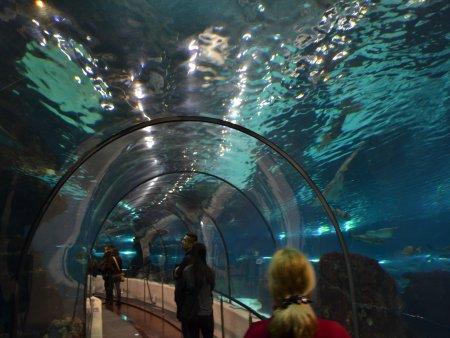 Aquarium Barcelona 4