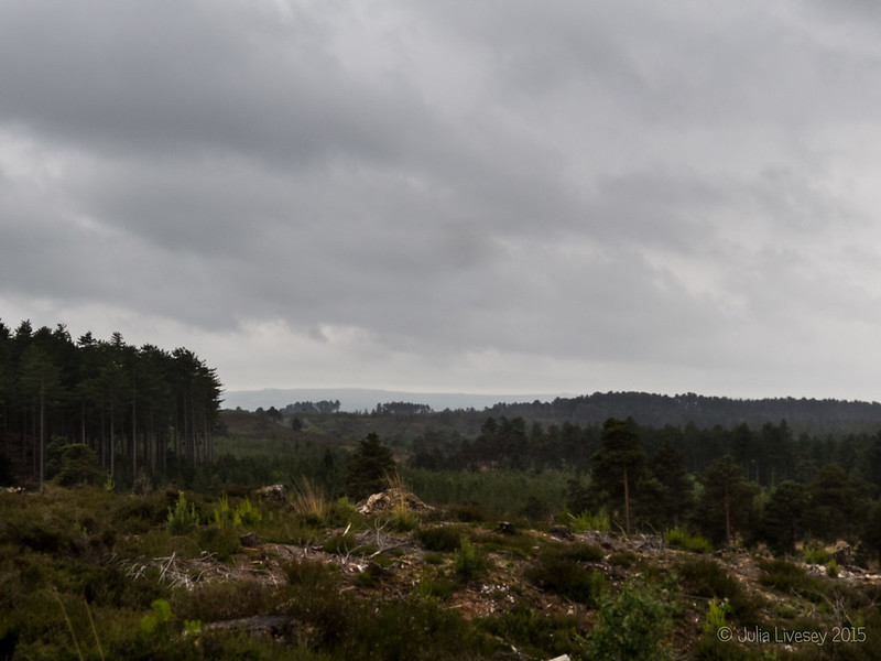 Rain clouds over Wareham Forest