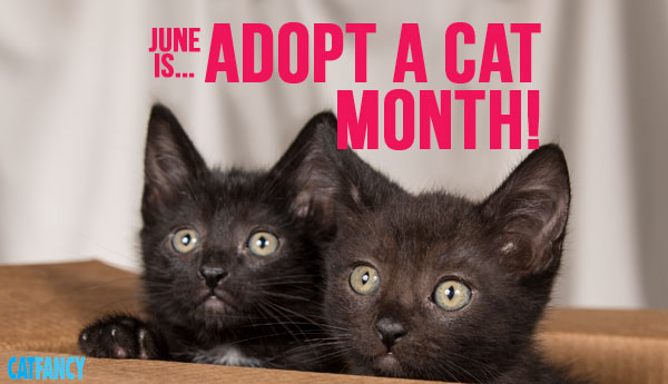 adopt a cat month pointers   petcha