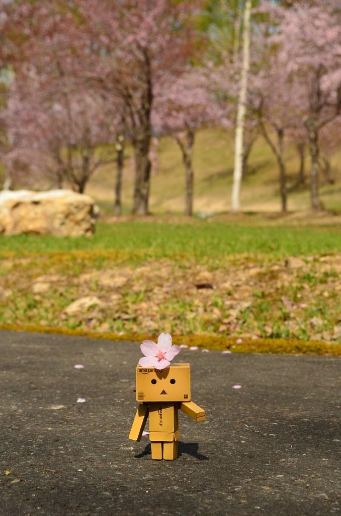 2015 いくたはら公園桜 (1)