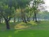 Park-scenery