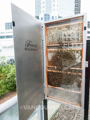 Wild for Bees Launch at Fairmont Waterfront-8
