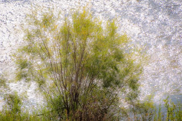 bush against sparkling water