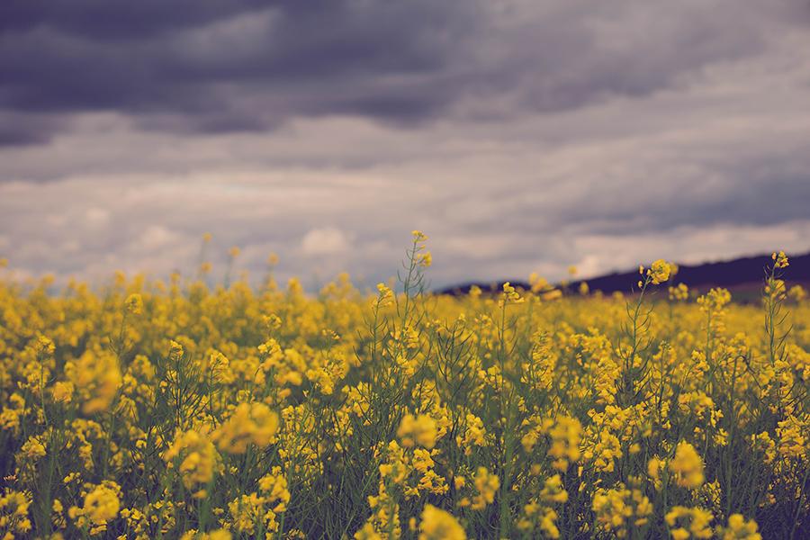 Nubes entre flores