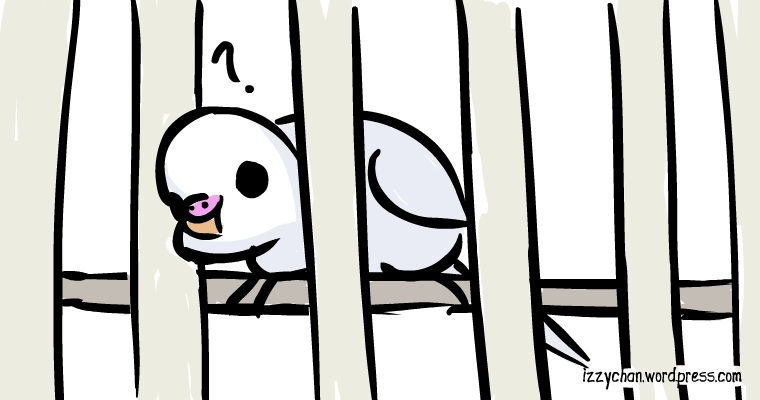 white bird bird cage bars