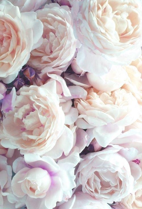 Daisybutter - Hong Kong Lifestyle and Fashion Blog: peonies