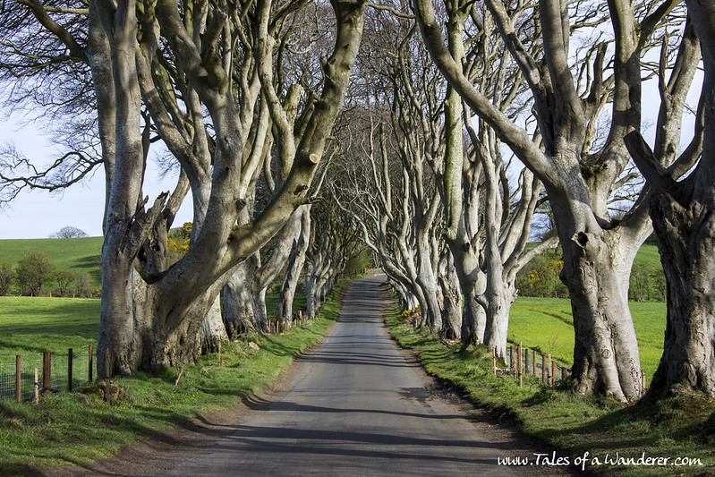 BALLYMONEY - The Dark Hedges