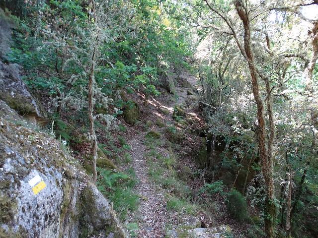 Sendero en el PR-G 181 Ruta de Cibrisqueiros a San Cosmede