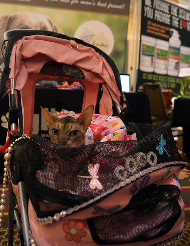 blogpaws-cococoutureC01049