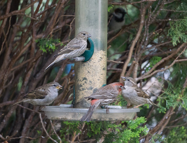 Calm Moment at the Bird Feeder