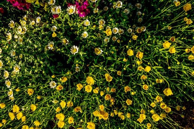 201505_flower8.jpg