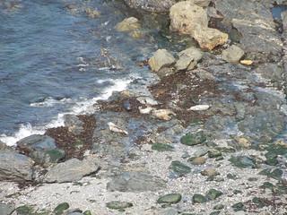 15 05 09 Day 17 (20) Kynance Cove