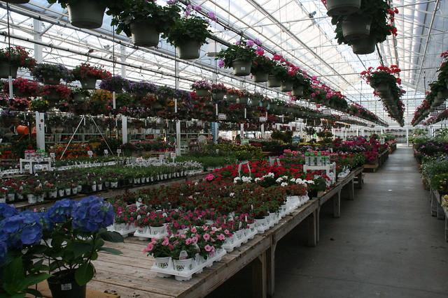 Petitti's Garden Center