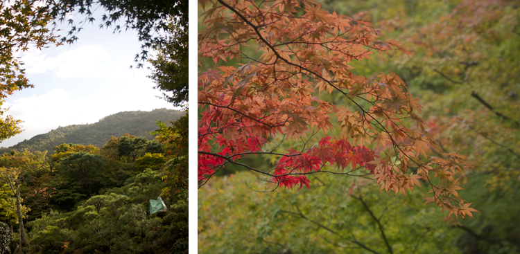 Arashiyama, Kyoto, Bramble and Thorn, Japan, Asia, Travel, Bamboo Groves