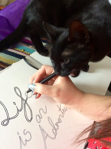 why my cats are mental - luna likes pens