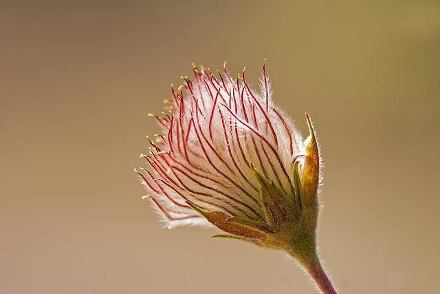 Bloom 20d_1674