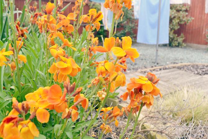 aberdeenshire garden