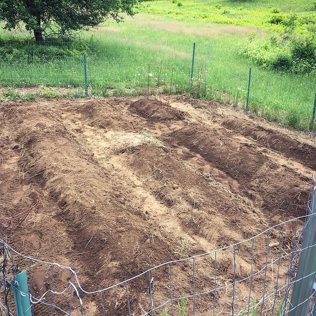 Raked up some graves. Just need poo and vegetables. Time to play a game of chicken with the forecasted rain.