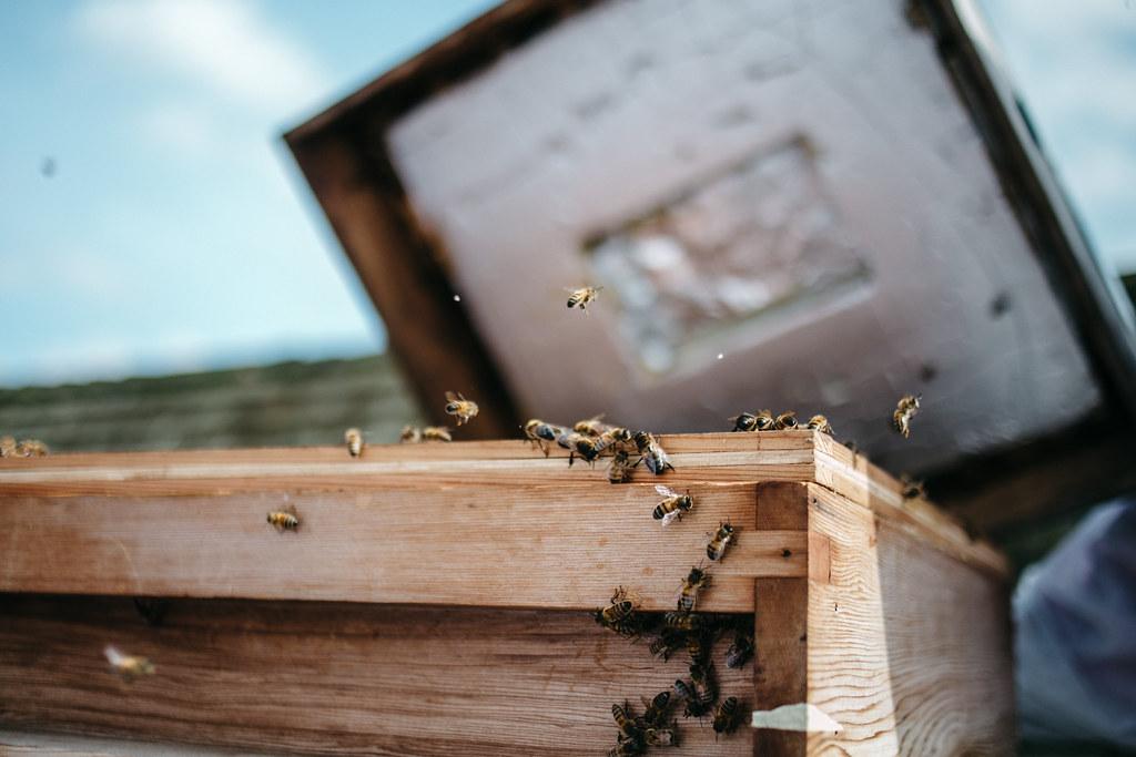 Bermondsey Street Bees