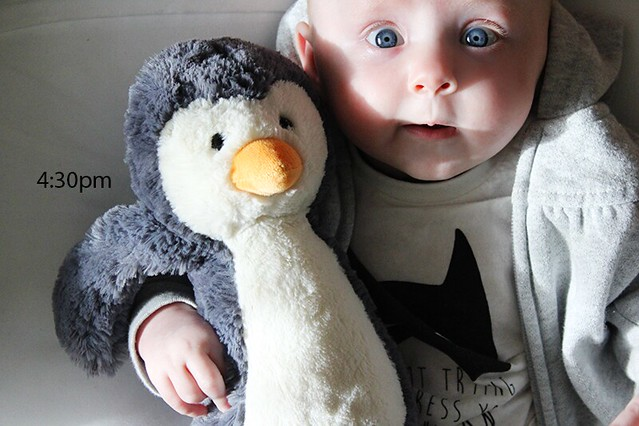 {day in the life} May 2015 | Penguin Snuggles