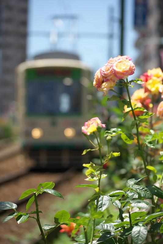 Tokyo Train Story 都電荒川線 2015年5月30日