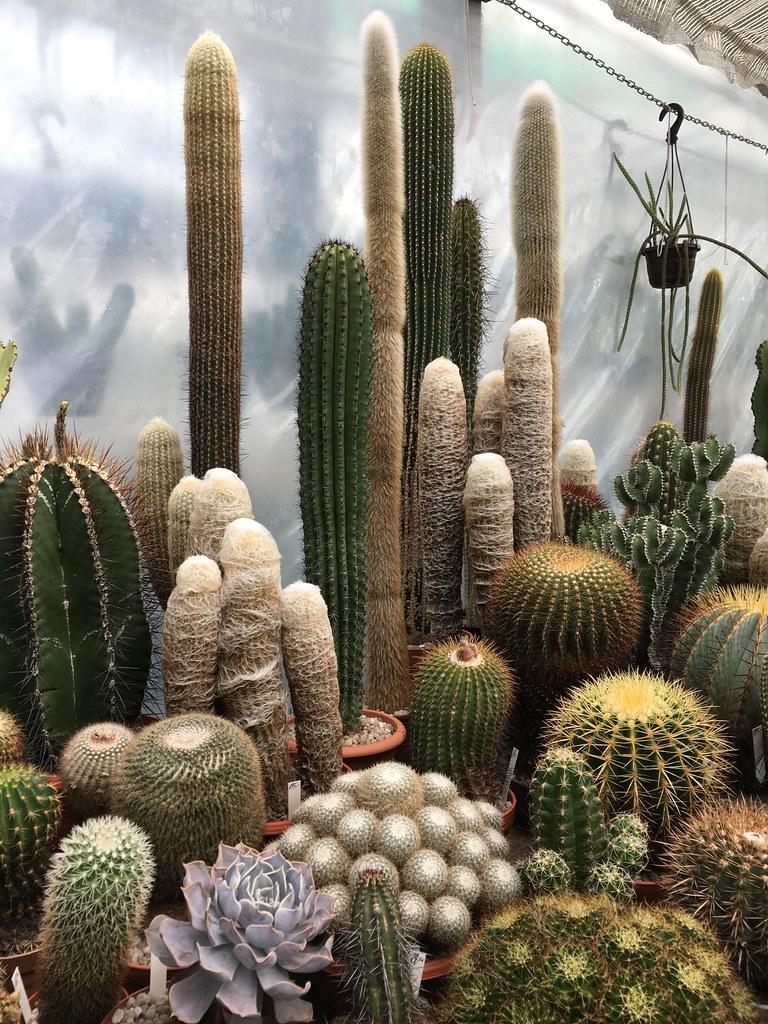 Ha-Ka-Flor - cactus et plantes grasses 27773683283_e97806db4d_b