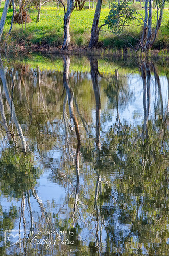 Gumtree Reflections