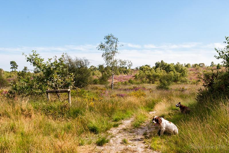 Walking up the hill on Dunyeat's Heath