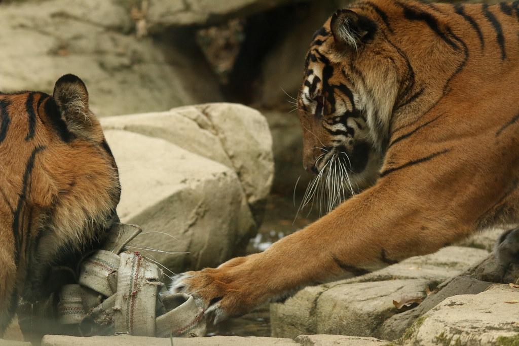 Zoo de la Boissère du Doré 29618560291_66dfda085e_b