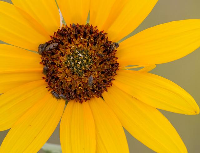 Bugs-in-flower-13_7d1__070916