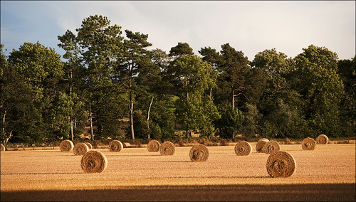 Bales near Oyne | by The Terry Eve Archive